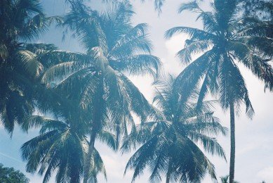 Coconut trees shading us from the sun